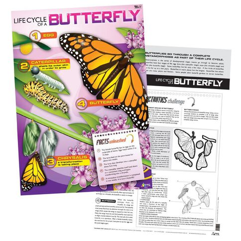 TFC Poster Life Cycle Of A Butterfly