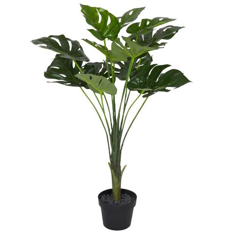 Monstera Tree Potted