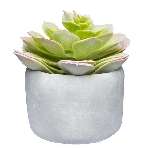 Uniti Round Succulent Plant