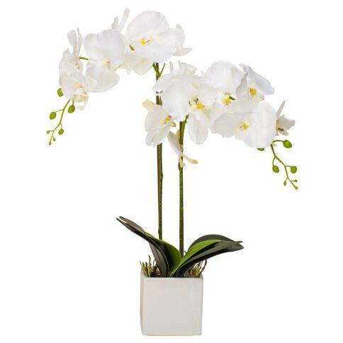 Uniti White Orchid Plant In Ceramic Pot White