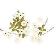 Little Birdie Flowers Fiorella 25 Piece Assorted