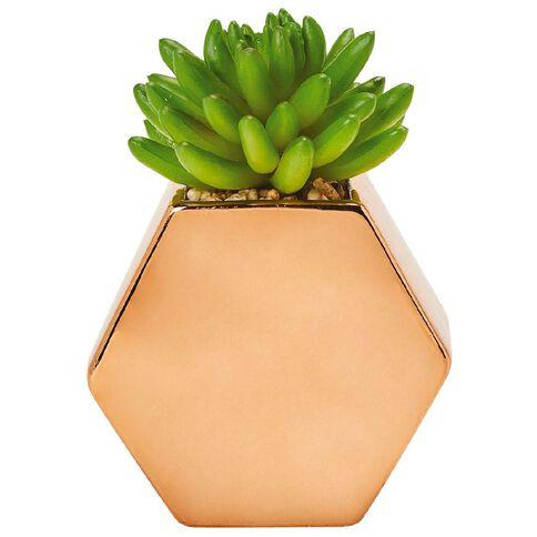 Uniti Rose Crush Plant In Hexagon Pot Rose Gold Rose Gold