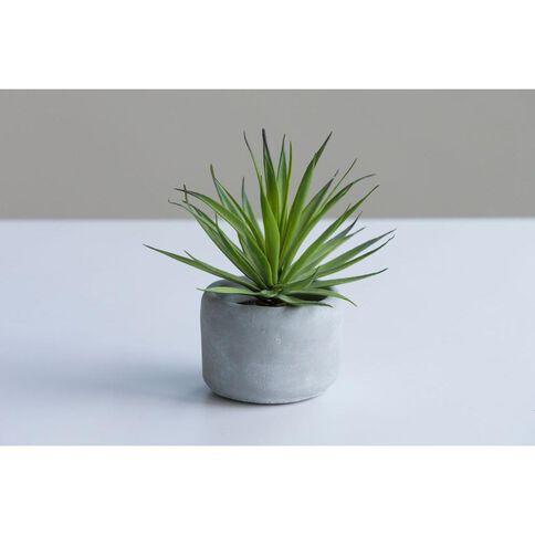 Uniti Sword Grass Plant