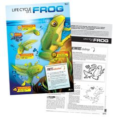 TFC Poster Life Cycle Of A Frog