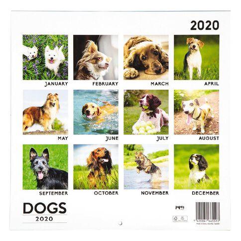 Modena Dog Calendario 2020.2020 Calendar Dogs 290mm X 290mm Warehouse Stationery Nz