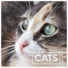 Calendar 2019 Cats 290mm x 290mm