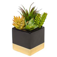 Uniti Succulent Plant Black Gold Ceramic Pot